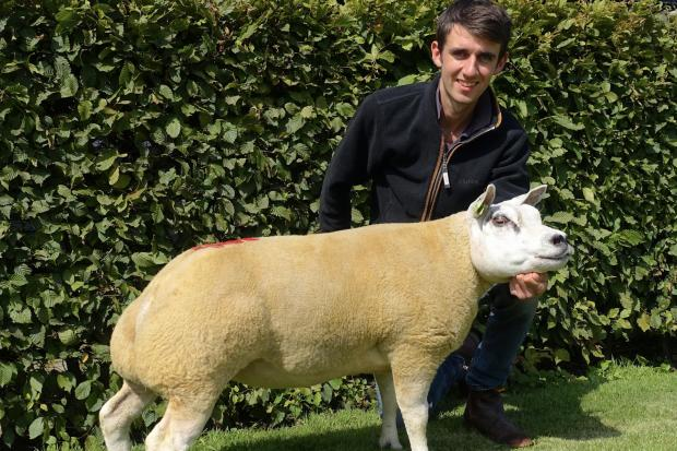 Louie van Geffen and flushing ewe Tiptop Diana